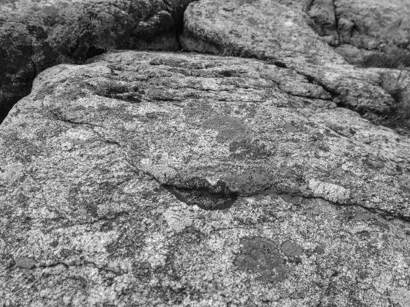 Wooing lichen, aka the flirting fungus