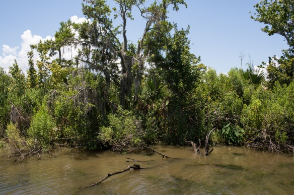 Swampscape 5. Not a single marshmallow tree. Really, this is an ecological disaster
