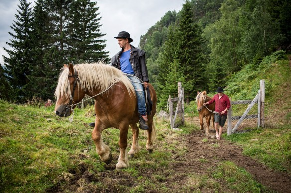 There ain't much cattle in Hardanger. There are, however proper cowboys