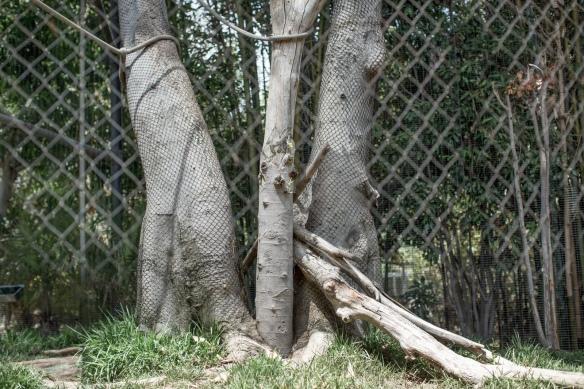 Zoo #3. No Black Mangabeys