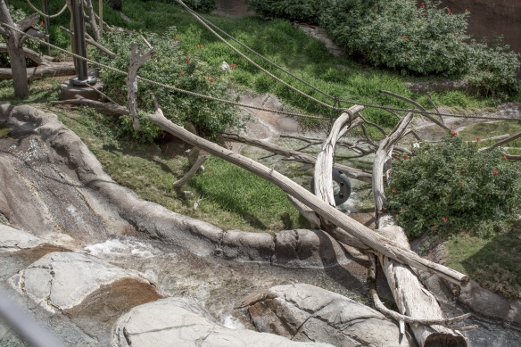 Zoo #5. No Allen's Swamp Monkeys or African Spot-necked Otters