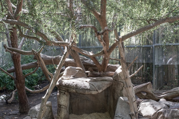 Zoo #7. No Giant Pandas