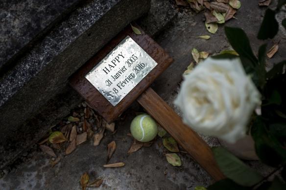 Pet Cemetery #01