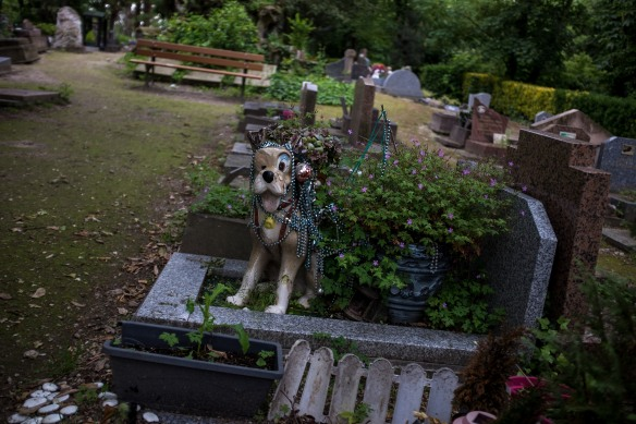 Pet Cemetery #02