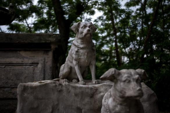 Pet Cemetery #04