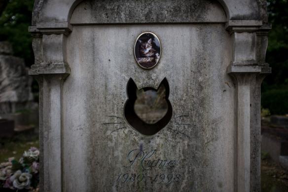 Pet Cemetery #09