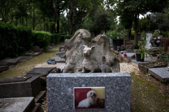 Pet Cemetery #10